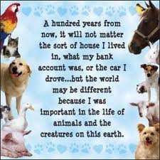 A hundred years from now, it will not matter the sort of house I lived in, what my bank account was, or the car I drove... but the world may be different because I was important in the life of animals and the creatures on this earth.
