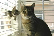 Kitten stuck in blinds.